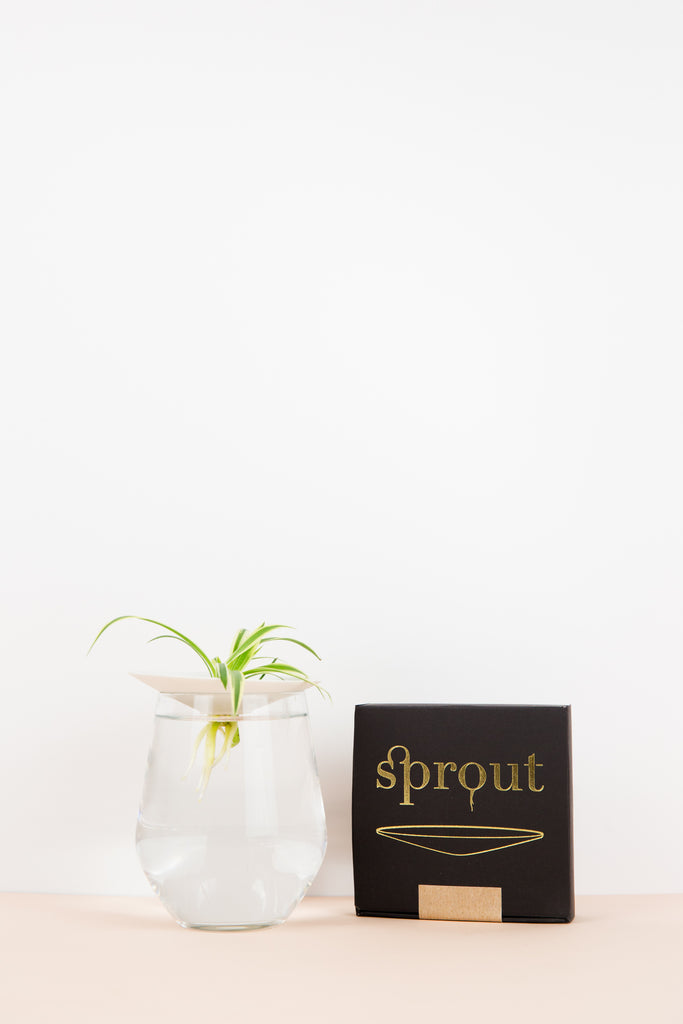 Sprout Propagation Holder