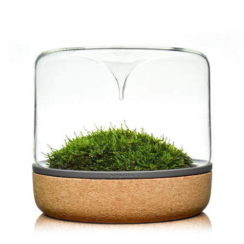 pre-order botanica boutique mossarium - M sanctuary rainforest cork