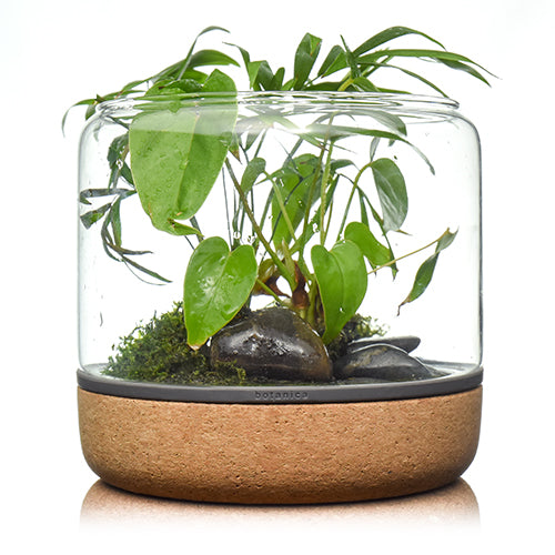 botanica boutique mossarium - Sanctuary M Temperate Light Cork