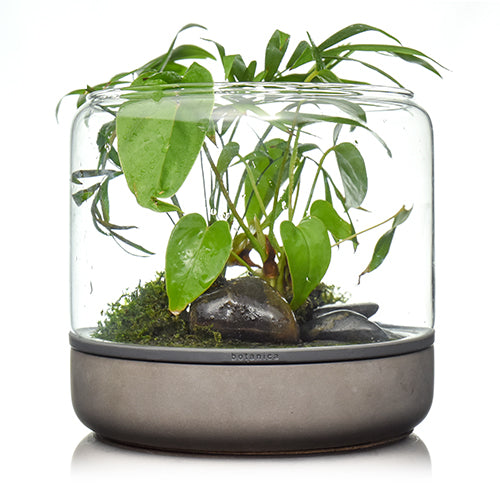 pre-order botanica boutique mossarium - Sanctuary M Temperate Concrete