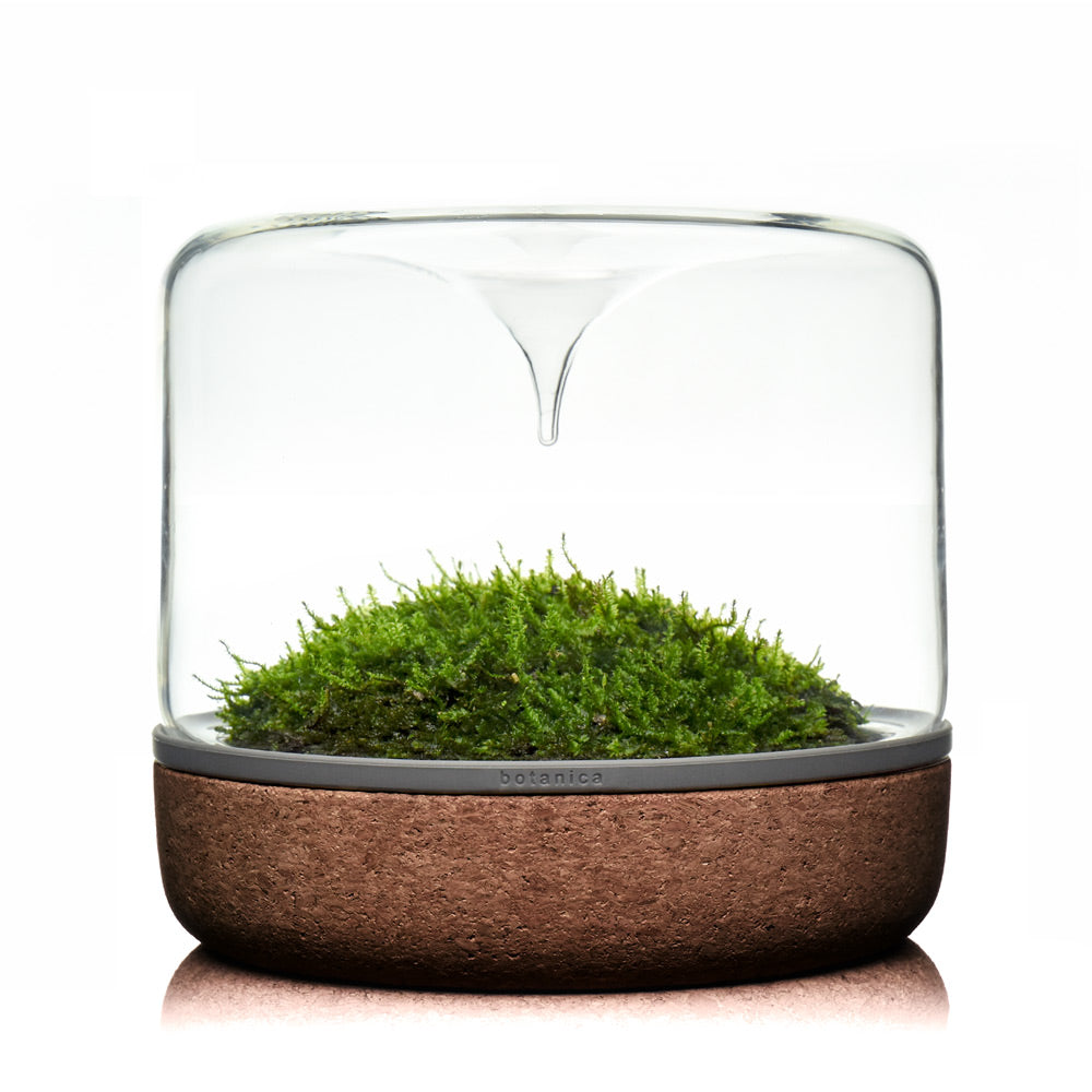 botanica boutique mossarium - M sanctuary rainforest dark cork