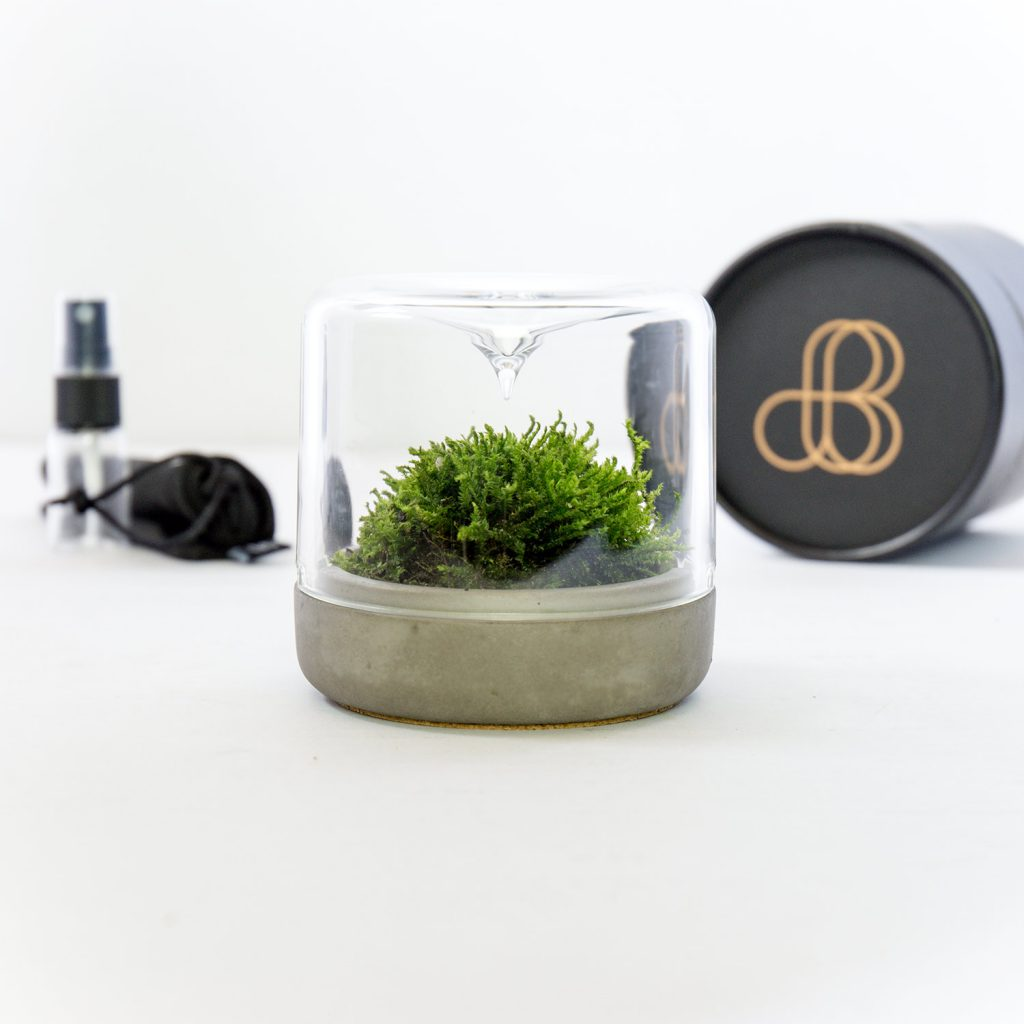 botanica boutique mossarium - S sanctuary concrete