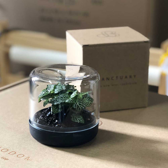 botanica boutique recycled mini terrarium