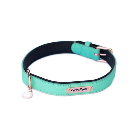 ZippyPaws Vivid Collection Teal Dog Collar