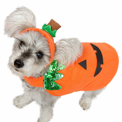 Pet Krewe Pumpkin Dog and Cat Costume