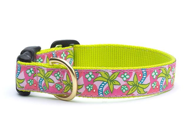 Up Country Pink Palms Collars & Leads