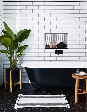 Best Plants For Your Bathroom