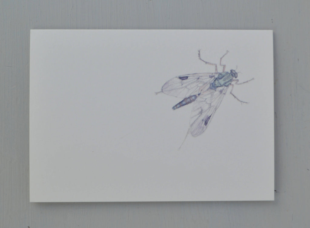 Fly greetings card