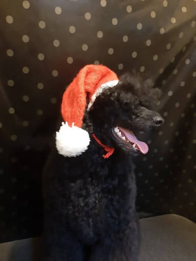 Christmas dog hat