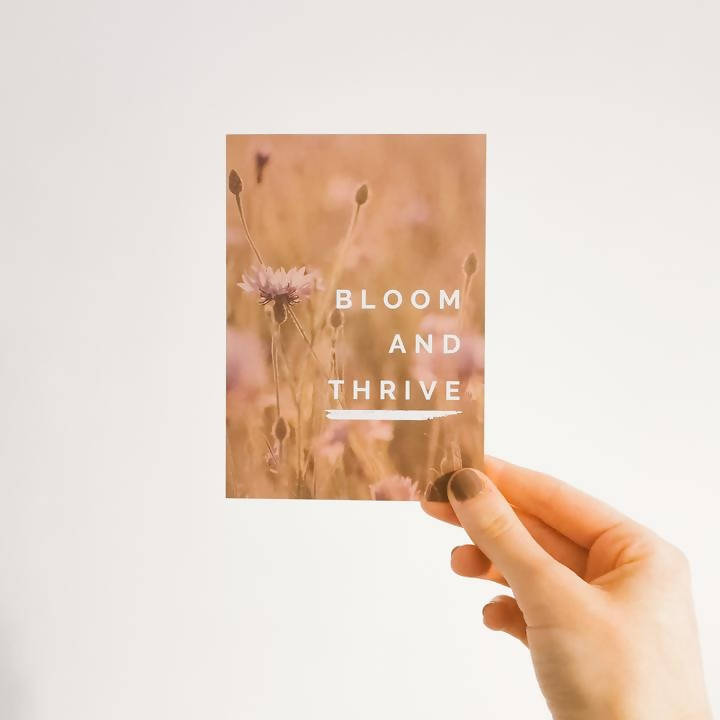 Bloom & Thrive Wildflower Gift Set