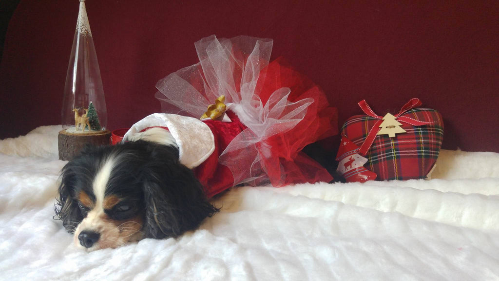 Christmas dog dress