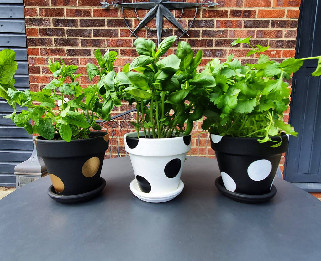 Black & Gold Plant Pot