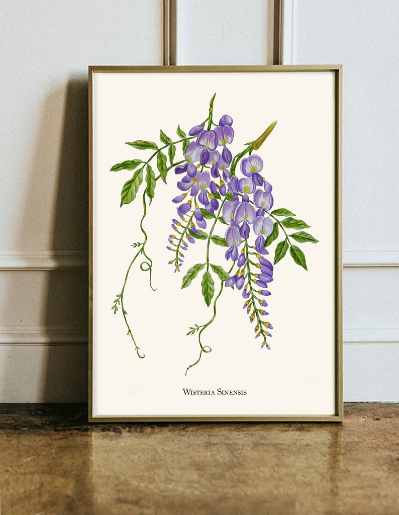 Wisteria Botanical Giclèe Print - Created using a hand painted artwork