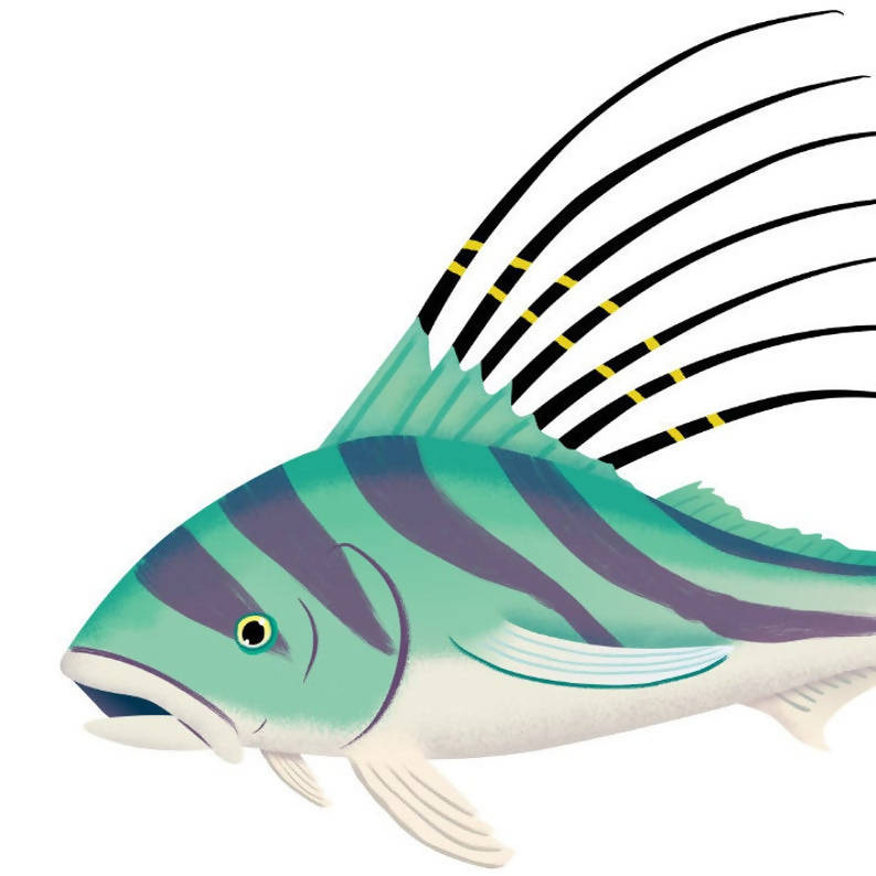 Roosterfish art print Illustrated tropical fish