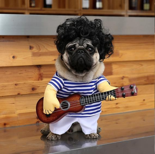 FUNNY PET GUITAR PLAYER COSPLAY DOG