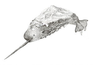 Narwhal 26 x 41cm
