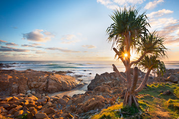 Sunrise Pandanus - The Salty Pixel