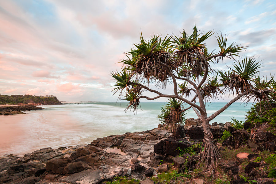 Pastel Pandanus - The Salty Pixel