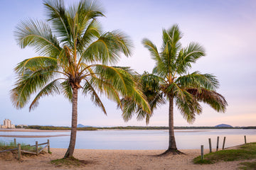 Cotton Tree Palms - The Salty Pixel