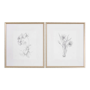 Botanical Sketches, Set of 2