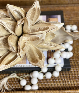 South African Seed Pod, Bleached