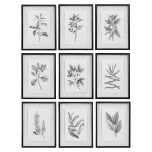 Set of 9 Framed Botanical Prints