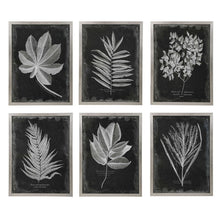 Load image into Gallery viewer, Framed Foliage, Set of 6