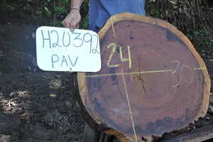 Pava Live Edge Wood Round Slab