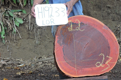 Arrayan / Lobito Live Edge Wood Round Slab
