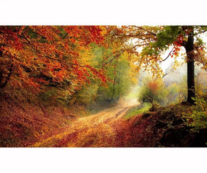Autumn Pathway, 3D Diamond Painting Full Rhinestones -Diamond Paintings, Diamond Paintings Store