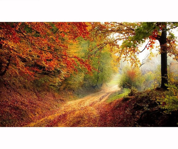 Autumn Pathway, 3D Diamond Painting Full Rhinestones -Diamond Painting Kits, Diamond Paintings Store