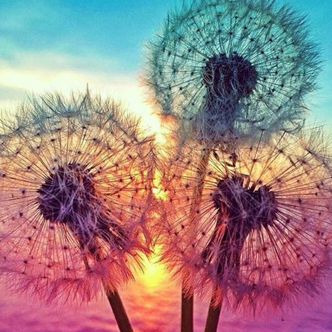 Sunset Dandelion 5D Diamond Painting Kit -Diamond Paintings, Diamond Paintings Store