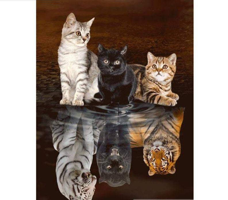 Cats - Full Square/Round Drill 5D DIY Diamond Painting, Cats Reflection | Full Square / Round Drill Diamond Mosaic Art -Diamond Painting Kits, Diamond Paintings Store