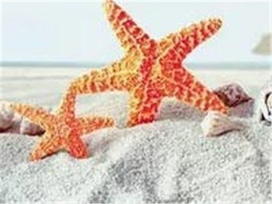 Starfish on the Beach, 5D Diamond Painting Kits - 20 Designs to Choose- On Sale -Diamond Paintings, Diamond Paintings Store