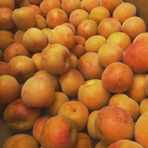 blenheim apricots! nectary goodness and deeply flavorful, these apricots are a fragile fruit lovingly grown in the Capay Valley. These delicate fruits are used to calling the bay area home and have been grown in Northern California for over 100 years.