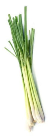 LEMONGRASS shrub