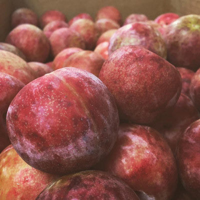 dapple dandy PLUOT jam