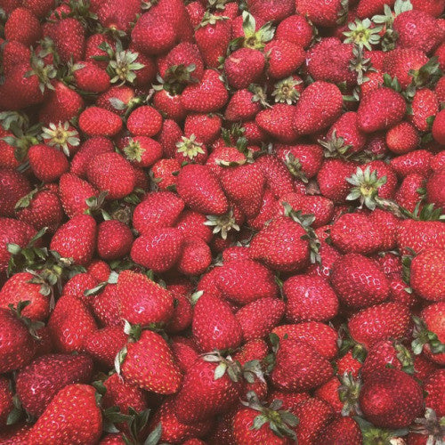 These are the organic albion strawberries that make this strawberry jam so delicious.
