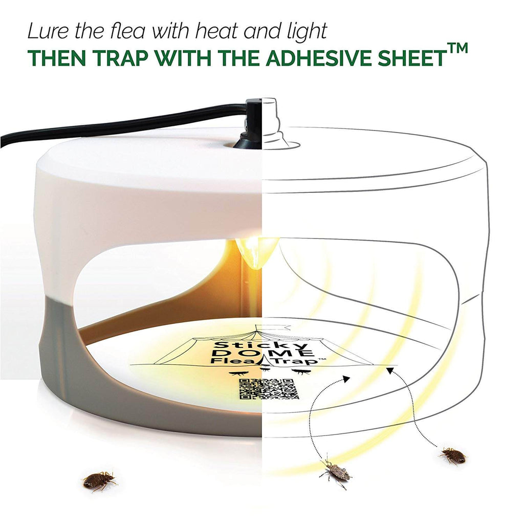 Flea Trap Non-Toxic No Insecticides Pest Control for Home - g-boxes