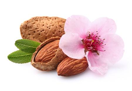 Almond Fragrance Oil