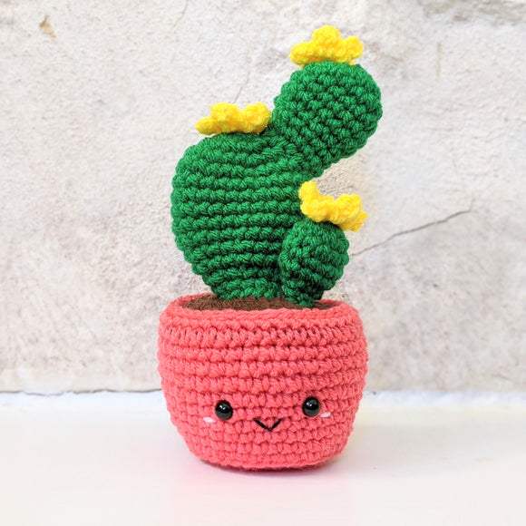 Birthday Cactus for my mom!
