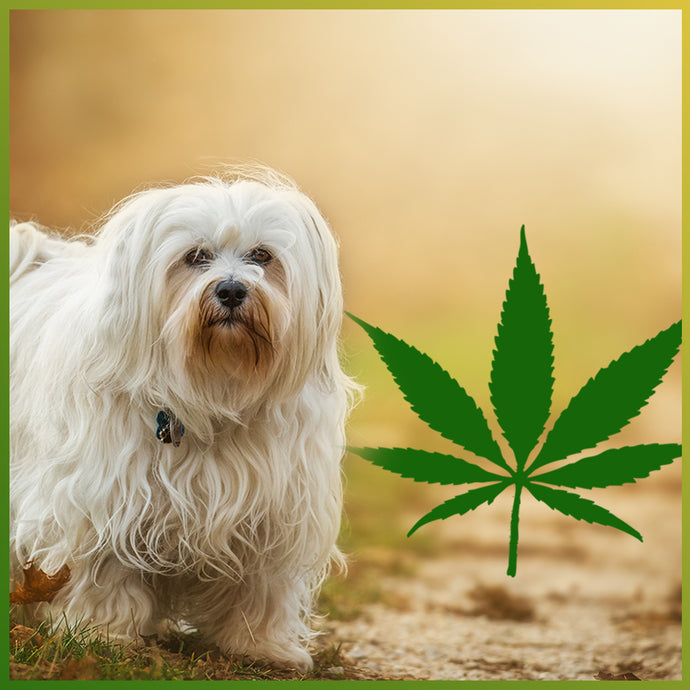 CBD for pets: Does it work?