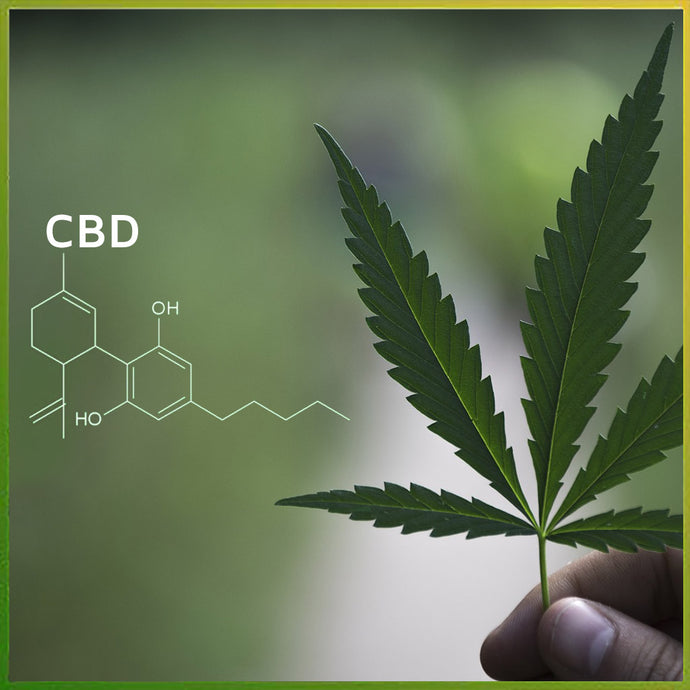 Why make CBD a part of your routine?
