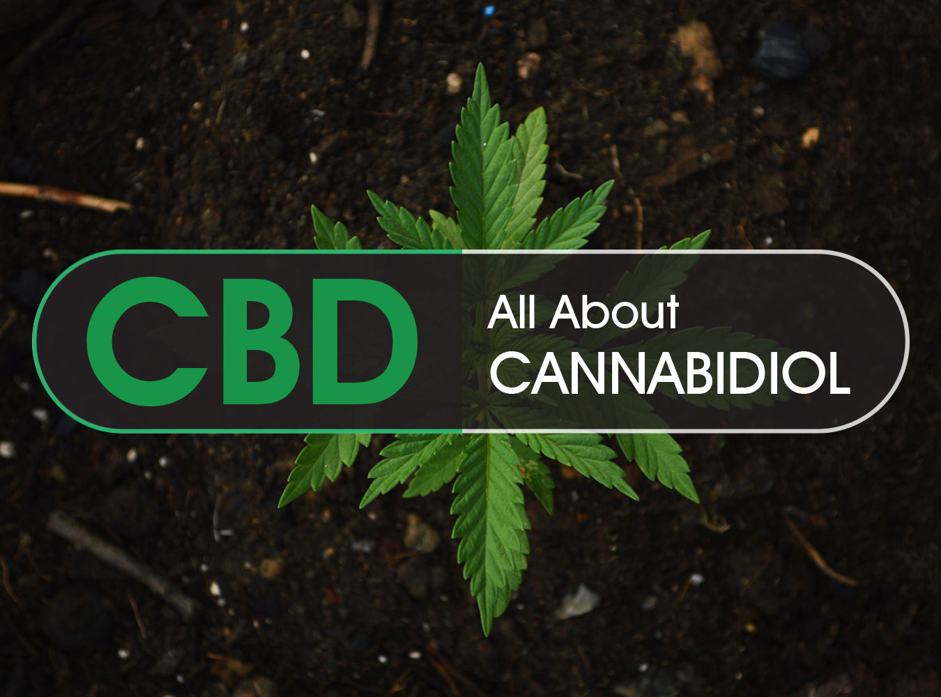 All About CBD Infographic
