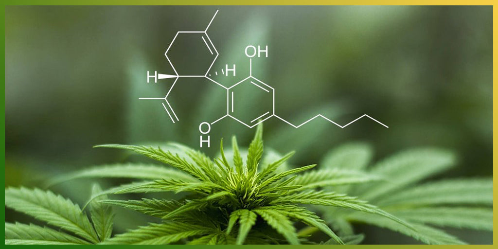 CBD improves health