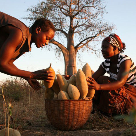 Baobab Collectors in Zimbabwe and South Africa