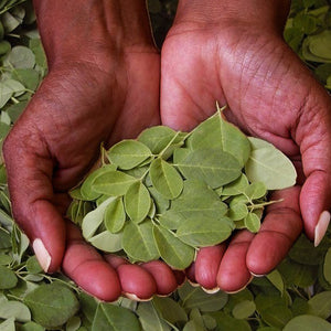 Moringa Powder - SAWA
