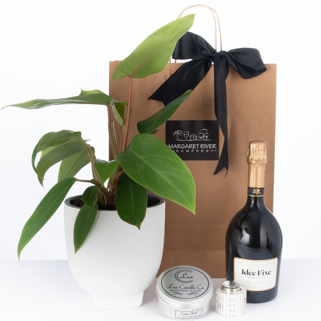 Breathe Plant Hamper
