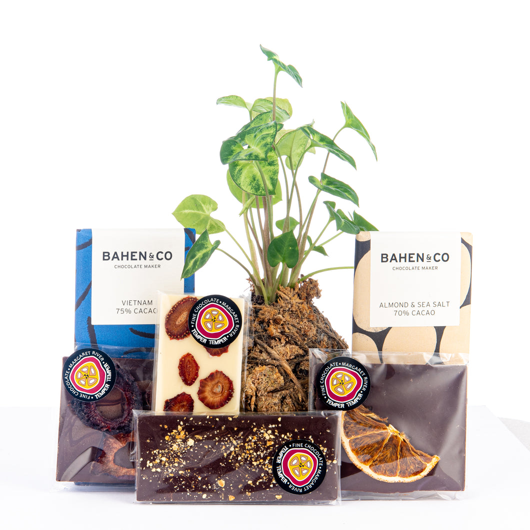Plant Hamper, Chocolate Hamper
