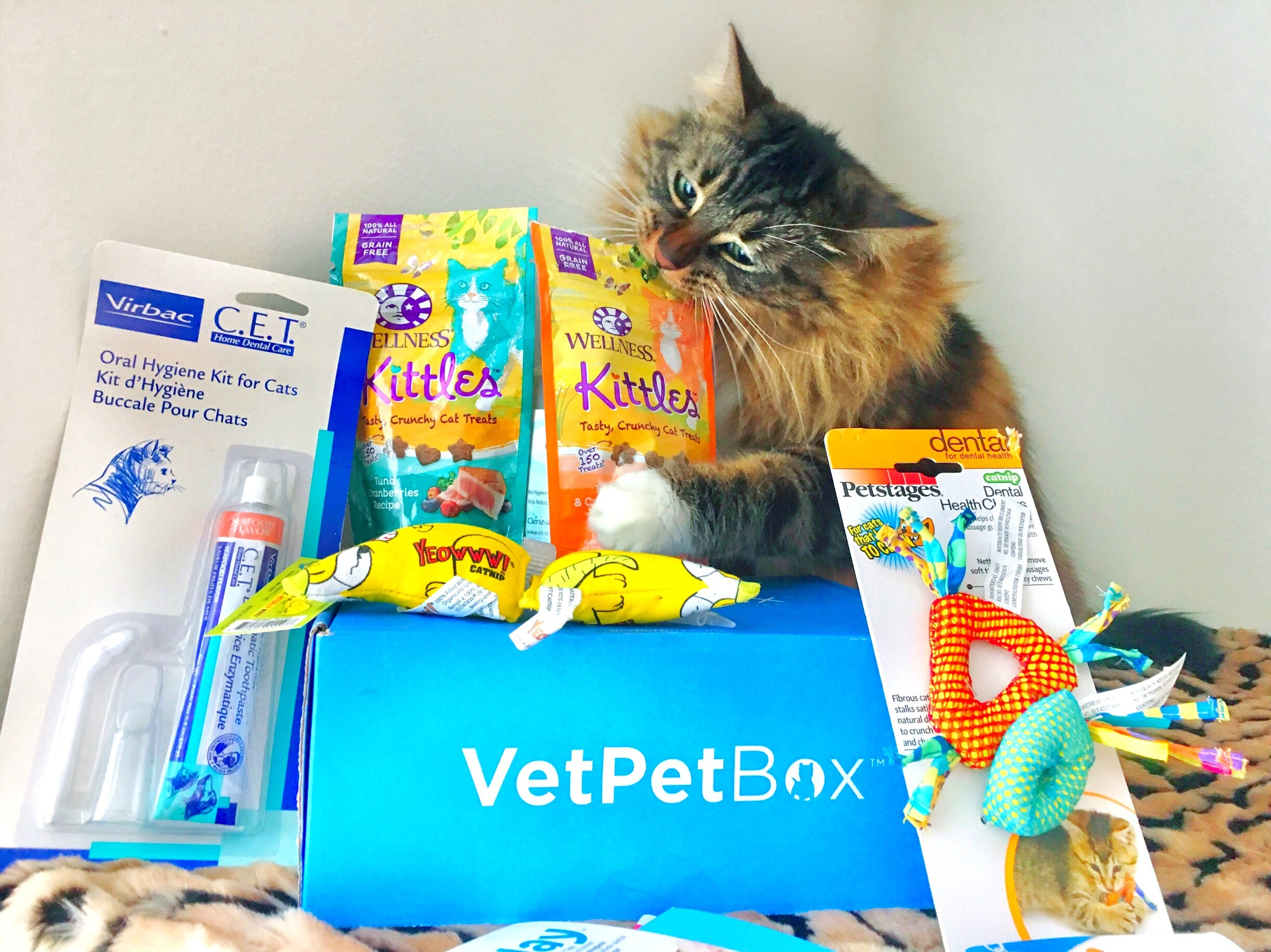 Vet Pet Box with all contents displayed and fluffy cat nibbling on the top of a bag of treats.